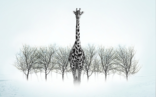 Arc Giraff